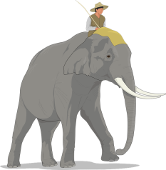 elephant-48415_960_720